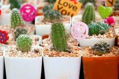 Vaso del cactus Fotografia Stock Libera da Diritti