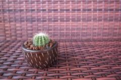 Vaso del cactus con il chicco di caffè fotografia stock libera da diritti