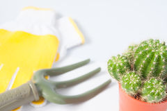 Vaso del cactus e degli strumenti di giardino isolati su fondo bianco Immagini Stock