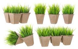 Vaso del cartone per le piante crescenti con i germogli Immagini Stock Libere da Diritti
