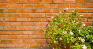 Vaso del fiore Fotografia Stock