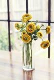 Vaso del fondo della luce della finestra di rose gialle Fotografia Stock Libera da Diritti