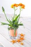 Vaso del POT di fiore dei fiori Fotografia Stock