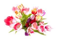 Vaso del tulipano Immagine Stock