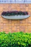Vaso dell'albero nella parete Fotografia Stock Libera da Diritti