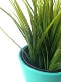 Vaso dell'erba Immagini Stock Libere da Diritti