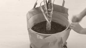 Vaso della pianta di Terracota video d archivio