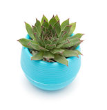 Vaso della pianta succulente verde Fotografia Stock