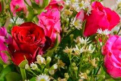 vaso della rosa rossa Immagini Stock