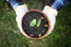 Vaso della tenuta della mano di piccolo albero immagini stock libere da diritti