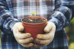 Vaso della tenuta della mano di piccolo albero fotografia stock