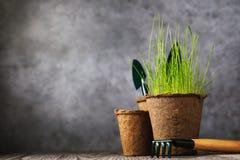 Vaso della torba con la pianta e gli strumenti per il giardinaggio su una tavola di legno fotografia stock