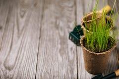 Vaso della torba con le erbe e gli strumenti per il giardinaggio su una tavola di legno fotografia stock