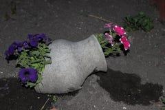 Vaso di fiore Immagini Stock Libere da Diritti