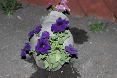 Vaso di fiore Fotografia Stock