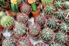 Vaso di fiore con varietà di succulenti nel deposito della pianta Fotografie Stock