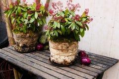 Vaso di fiore d'annata Immagini Stock