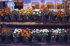 Vaso di fiore davanti alla caffetteria Immagini Stock Libere da Diritti