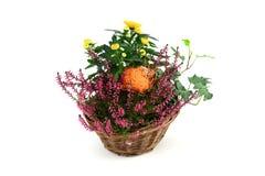 Vaso di fiore dell'erica con le mini zucche su backg bianco isolato Fotografia Stock