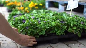 Vaso di fiore della scelta delle mani al deposito della pianta di giardino archivi video