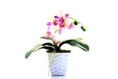 Vaso di fiore domestico della decorazione Fotografia Stock Libera da Diritti