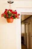 Vaso di fiore sulla parete Fotografia Stock Libera da Diritti