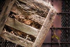Vaso di legno per l'orchidea Fotografia Stock