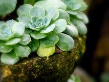 Vaso di pietra del raccolto Immagini Stock