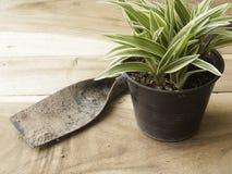 Vaso di plastica nero del comosum di Chlorophytum con la vanga su legno Immagini Stock Libere da Diritti