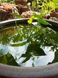 Vaso di verde fotografia stock