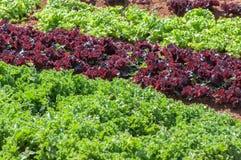 Vaso di verdure Immagini Stock