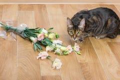 Vaso di vetro caduto e tagliato del toyger della razza del gatto domestico di flowe Fotografia Stock Libera da Diritti