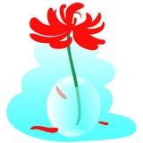 Vaso di vetro con il crisantemo rosso Fotografia Stock Libera da Diritti