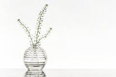 Vaso di vetro su un fondo bianco Fotografie Stock