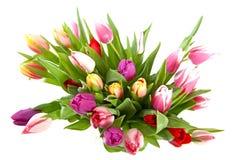 Vaso do Tulip Fotografia de Stock