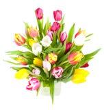 Vaso do Tulip Fotografia de Stock Royalty Free