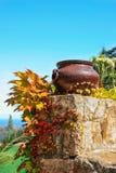 Vaso e foglie del ferro Fotografia Stock Libera da Diritti