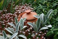 Vaso fra le piante Fotografia Stock
