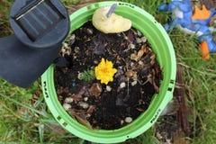 Vaso giallo di verde del fiore immagine stock libera da diritti