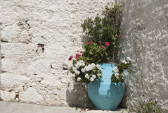 Vaso greco con i fiori Immagine Stock