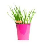 Vaso metallico rosa con erba su fondo bianco Fotografie Stock