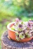 Vaso succulente sulla tavola di legno nel giardino Fotografie Stock
