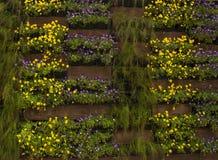 Vasos com flores Fotos de Stock