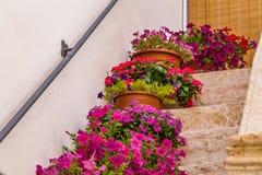 Vasos das flores em etapas da escadaria Imagem de Stock