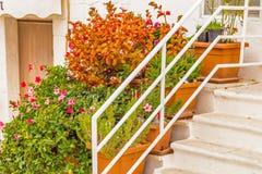 Vasos das flores em uma escadaria Imagem de Stock Royalty Free
