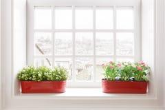 Vasos de flor na soleira Foto de Stock Royalty Free