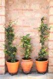Vasos de flores com palnts verdes Imagens de Stock Royalty Free