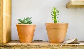 Vasos de flores pequenos Imagens de Stock