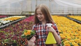 Vasos de flores de pulverização da menina bonita feliz na estufa lentamente vídeos de arquivo