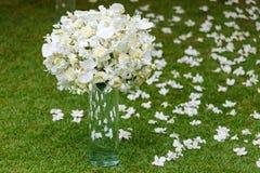 Vasos de vidro altos com os ramalhetes das orquídeas brancas na grama das hortaliças fotografia de stock royalty free